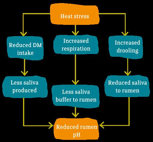 Heat Stress – Effect on Productivity | Megalac